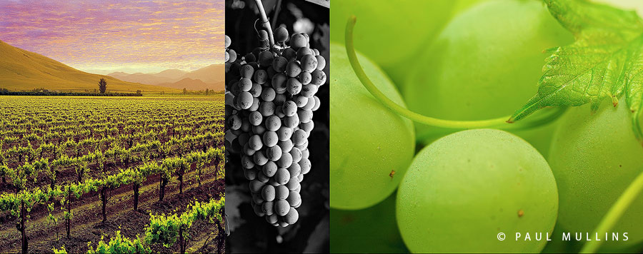 Reedley-Grapes14x31-copy.jpg