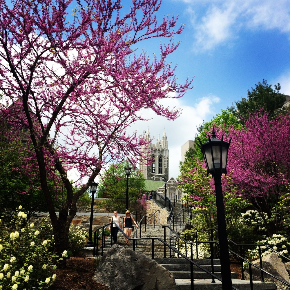"Boston College during the Spring/Summer.  View of Gasson Hall behind the ""Million Dollar Stairs."""