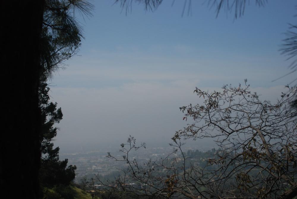 GriffithObservatory_FoliageView.jpg