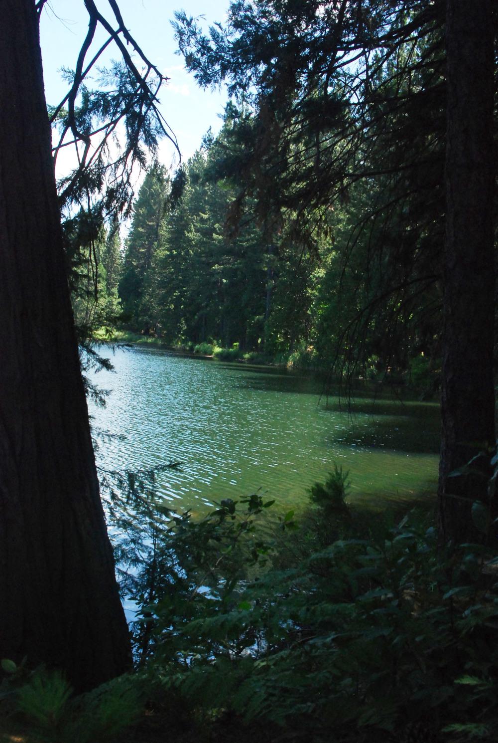 Lakemont Pine 2.jpg