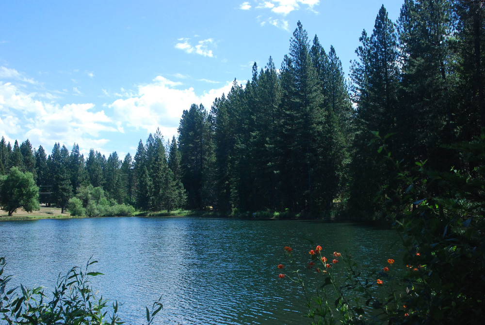 Lakemont pine.jpg
