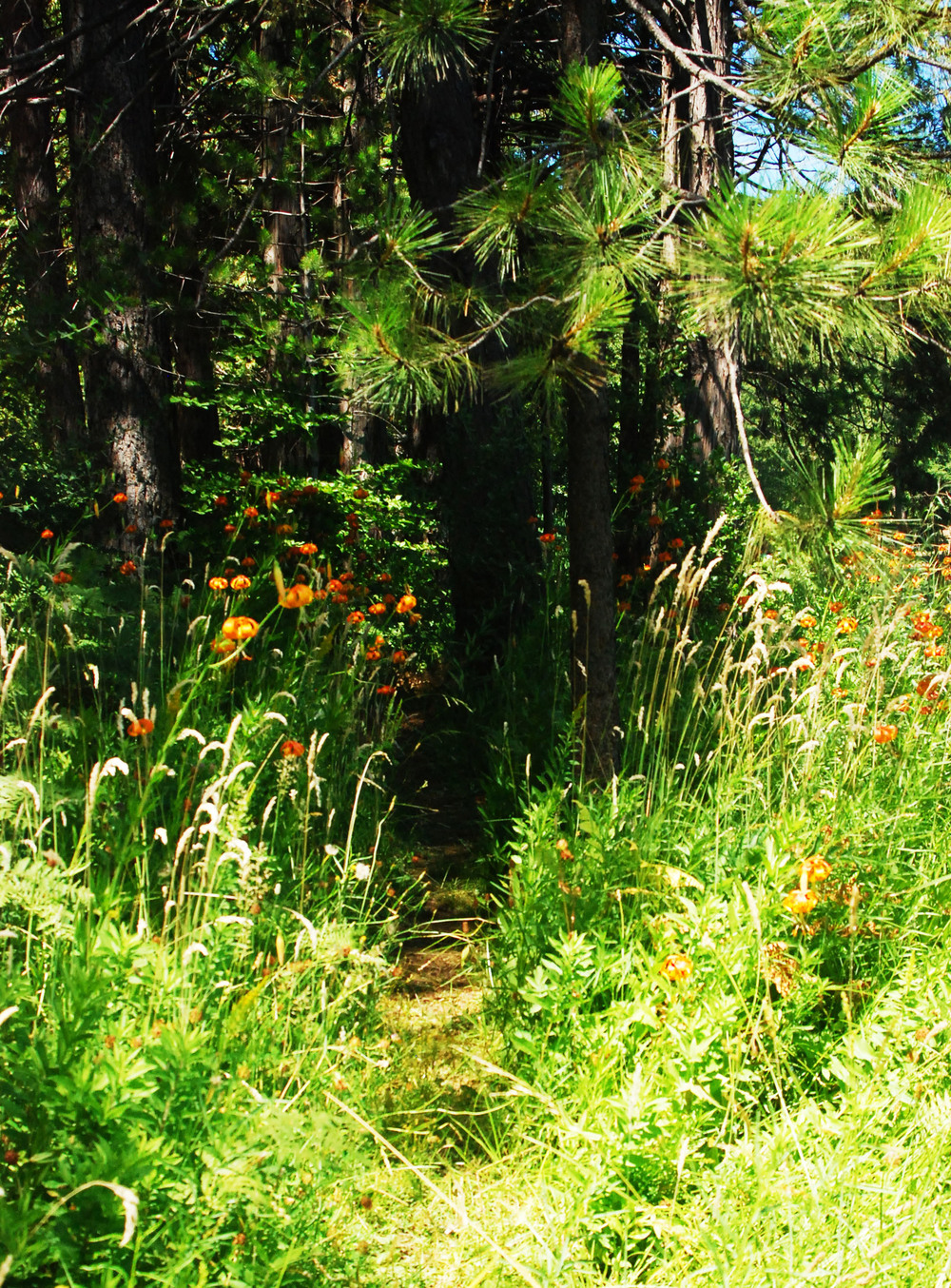 Lily Pathway.jpg