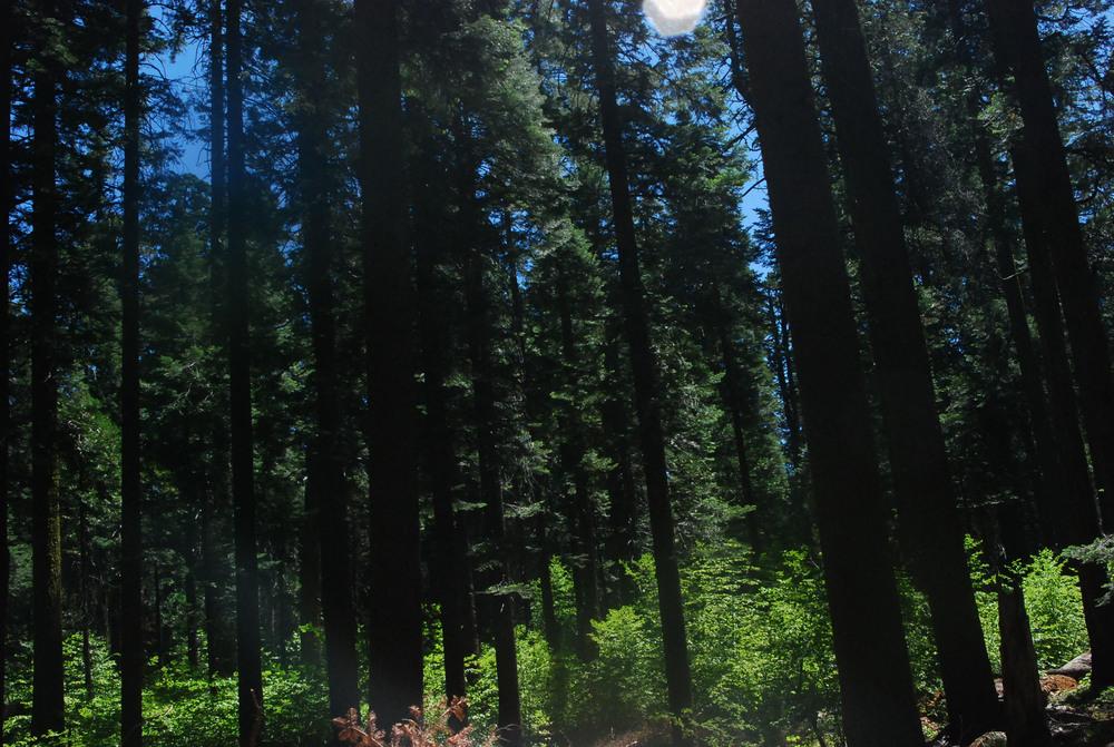 Tree Grove.jpg