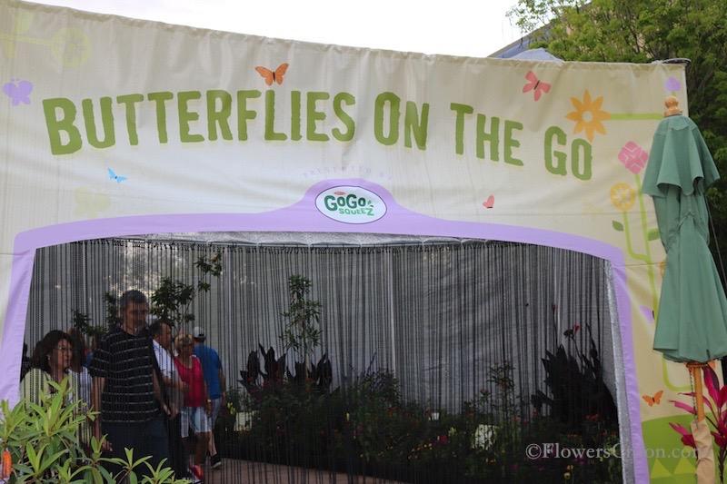 epcot-international-flower-and-garden-festival-butterflies