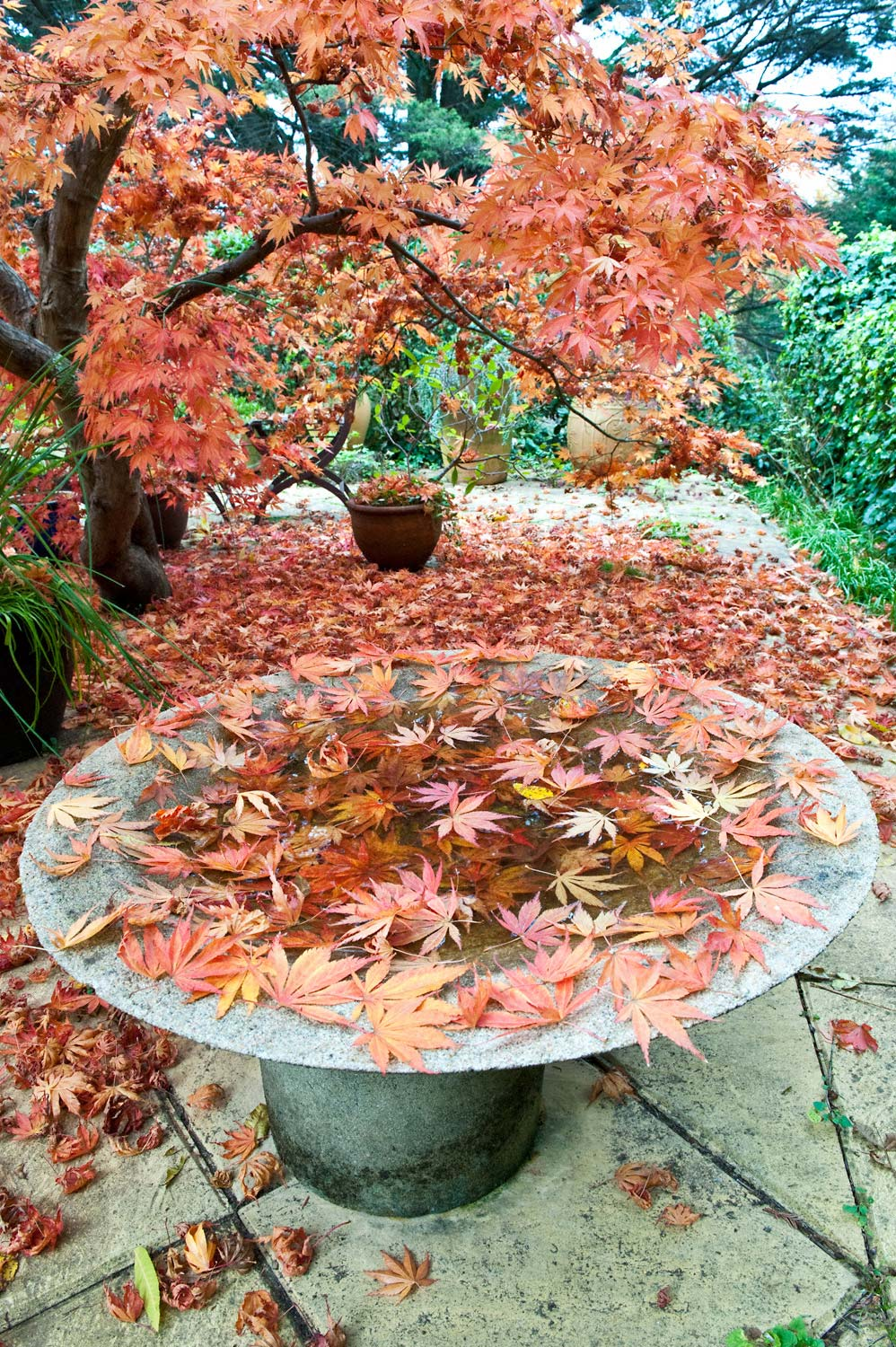 Warren-Hinder-Autumn-garden-Leura.jpg
