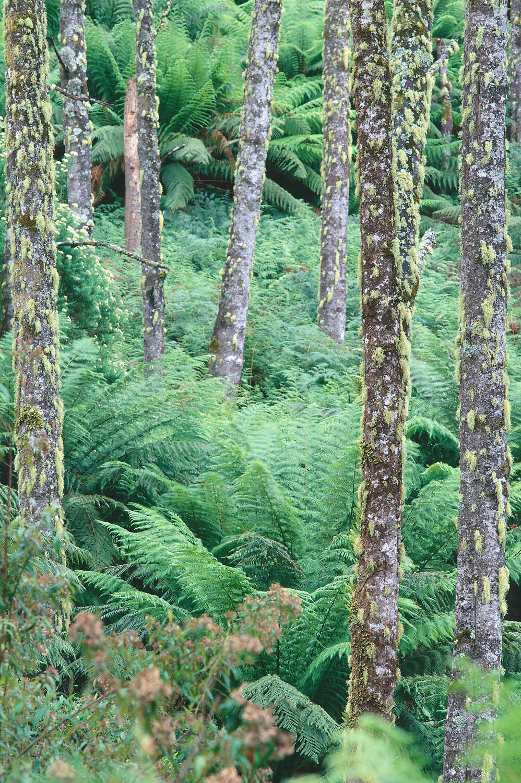 Warren-Hinder-NE-Tas-Forest-Blue-Tier.jpg