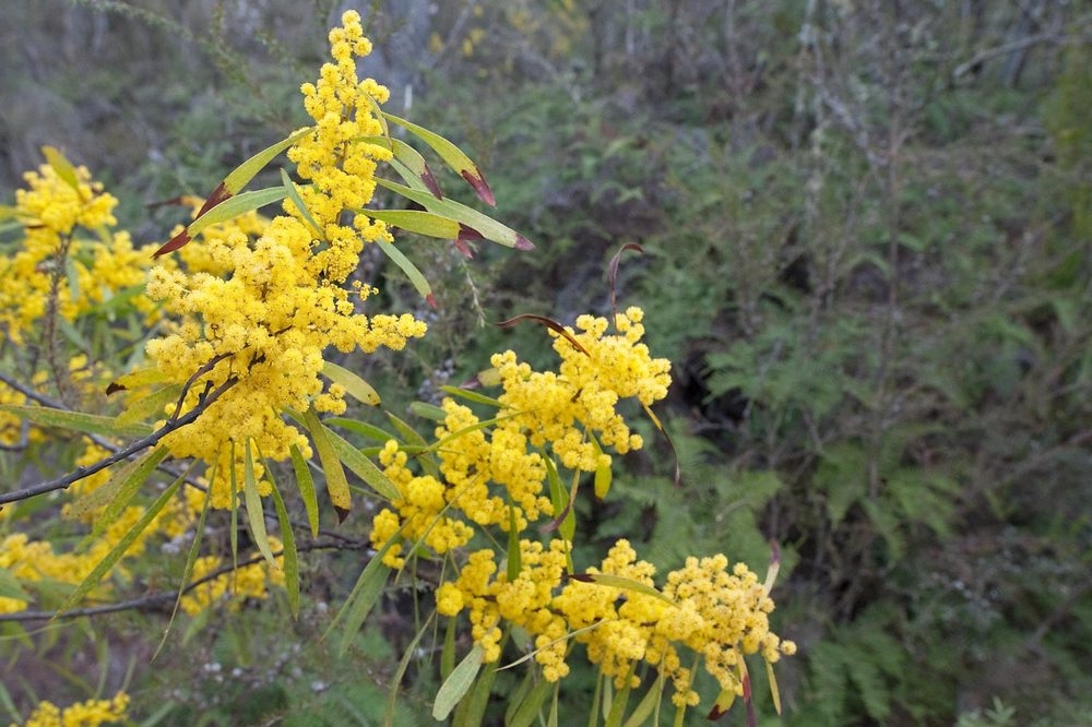 Warren-Hinder-LR-Wattle-Minni-Ha-Ha.jpg