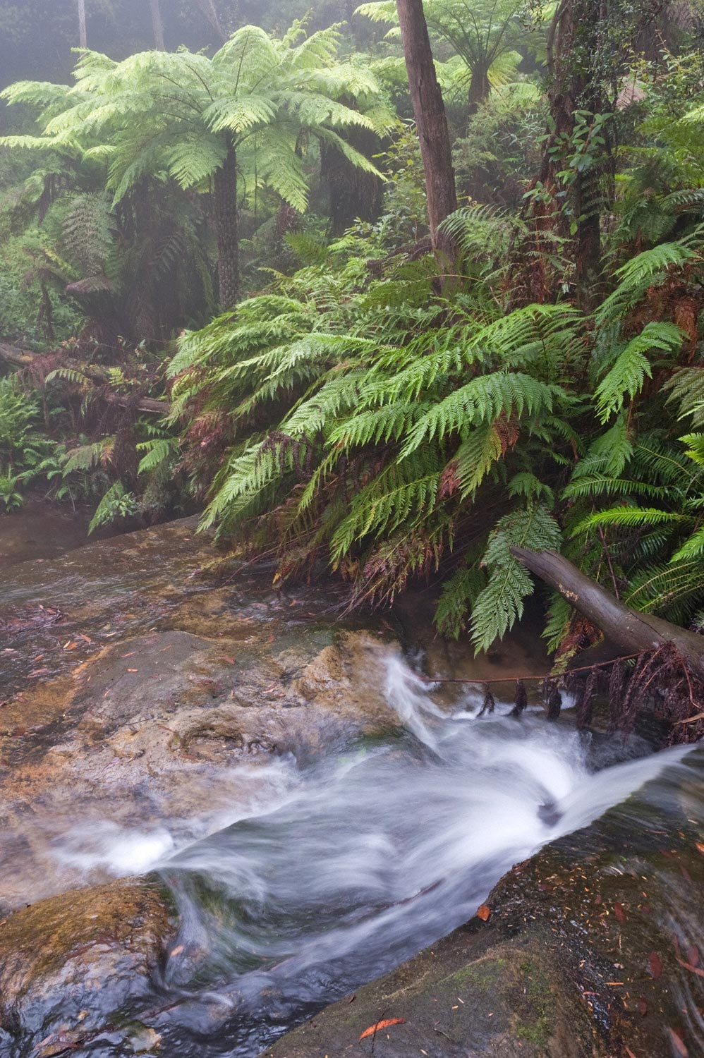 Warren-Hinder-Ferns-Stream-Edge-Mist-Leura-Cascades.jpg