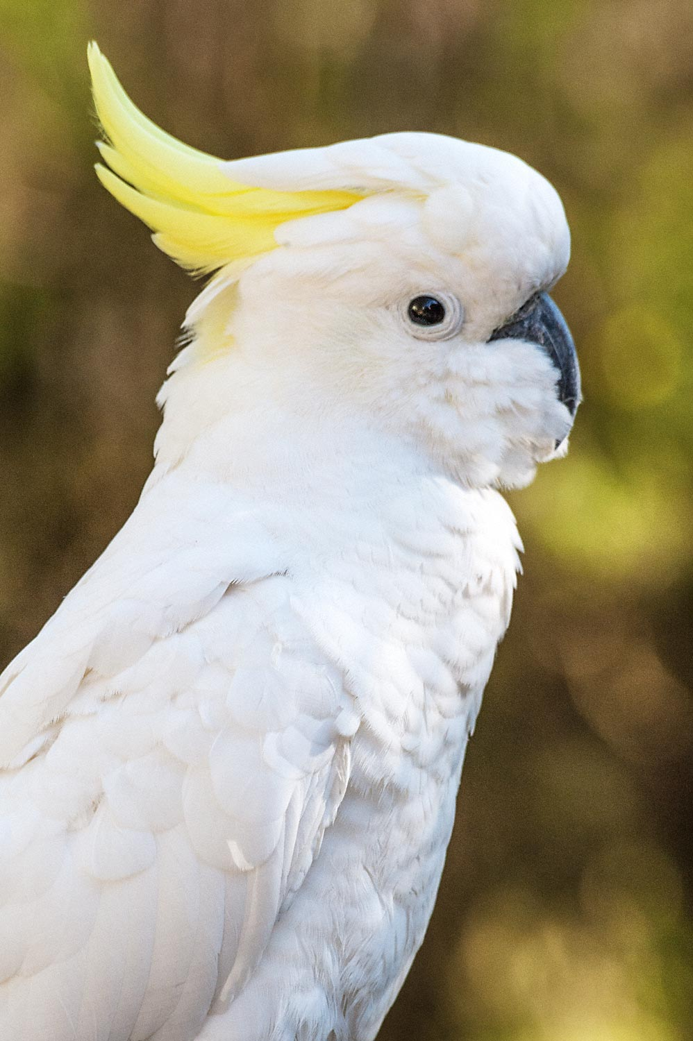 Warren-Hinder-Cockatoo-Leura-Cascades-Area.jpg