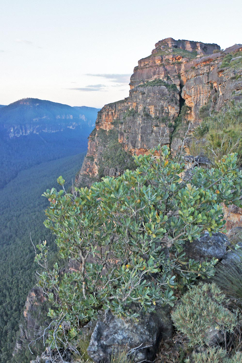 Warren-Hinder-LR-Butterbox-Point-Mt-Hay-looking-East.jpg