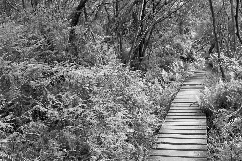 Warren-Hinder-LR-BW-Charles-Darwin-Walk-wooden-path.jpg