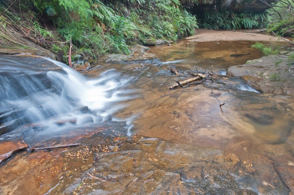 Warren-Hinder-LR-Charles-Darwin-Walk-stream-Wentworth-Falls.jpg