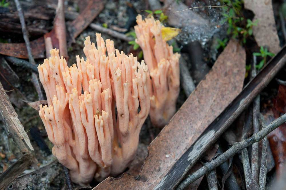 Warren-Hinder-LR-Orange-Fungi-on-Pulpit-Rock-Track_.jpg