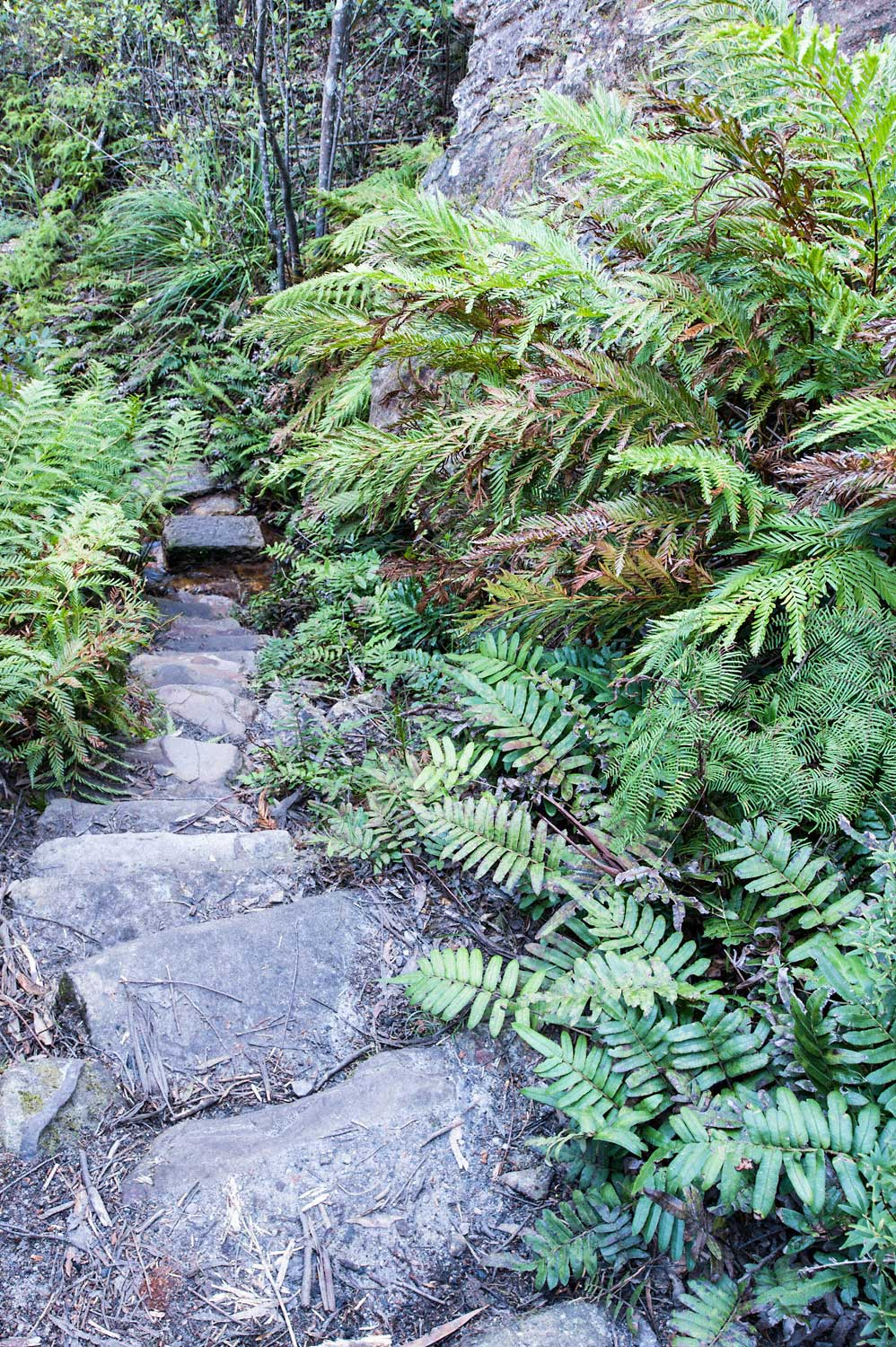 Warren-Hinder-LR-Path-Detail-and-fern-Grand-Canyon-Circuit.jpg