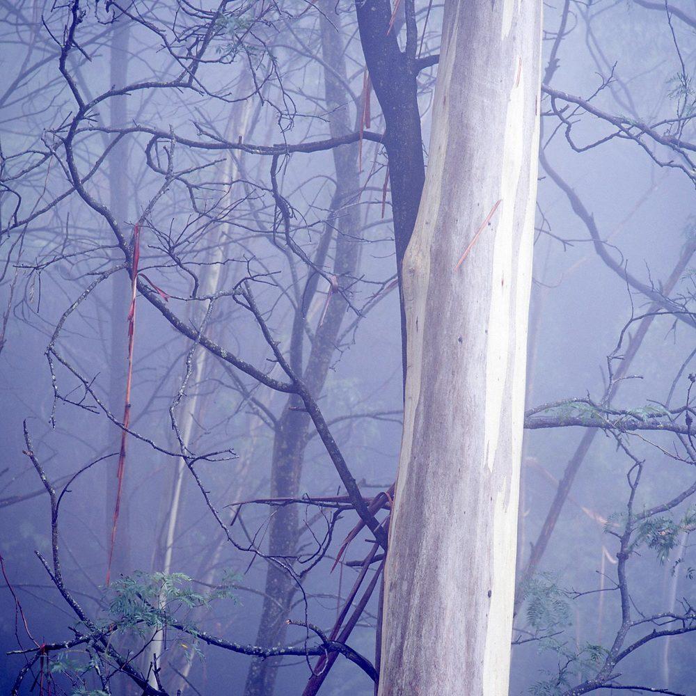 Warren-Hinder-LR-Square-Tree-Mist-Prince-Henry-.jpg