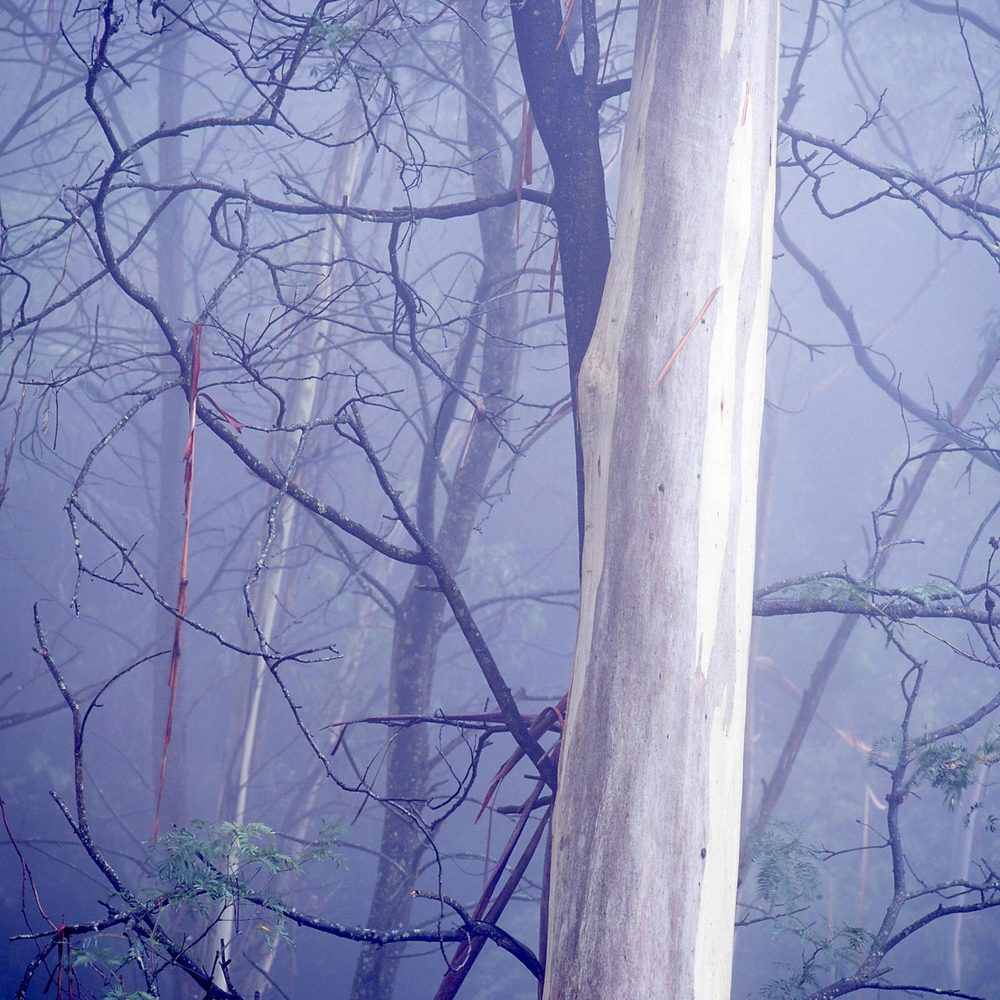 Warren-Hinder-LR-Square-Tree-Mist-Prince-Henry-.jpg
