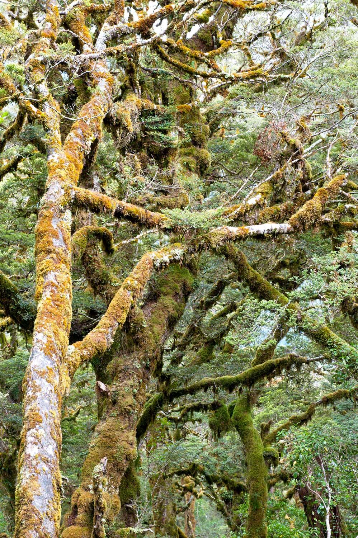Warren-Hinder-LR-Forest-Tree-Stand.jpg
