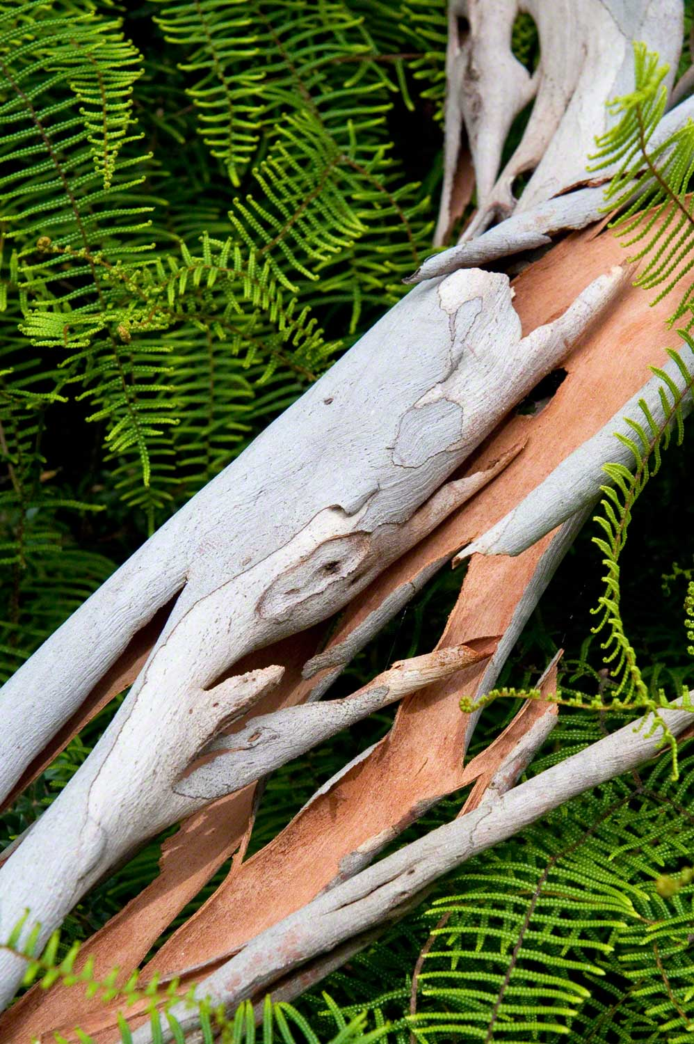 Warren-Hinder-LR-Bark-in-Ferns-Braeside.jpg