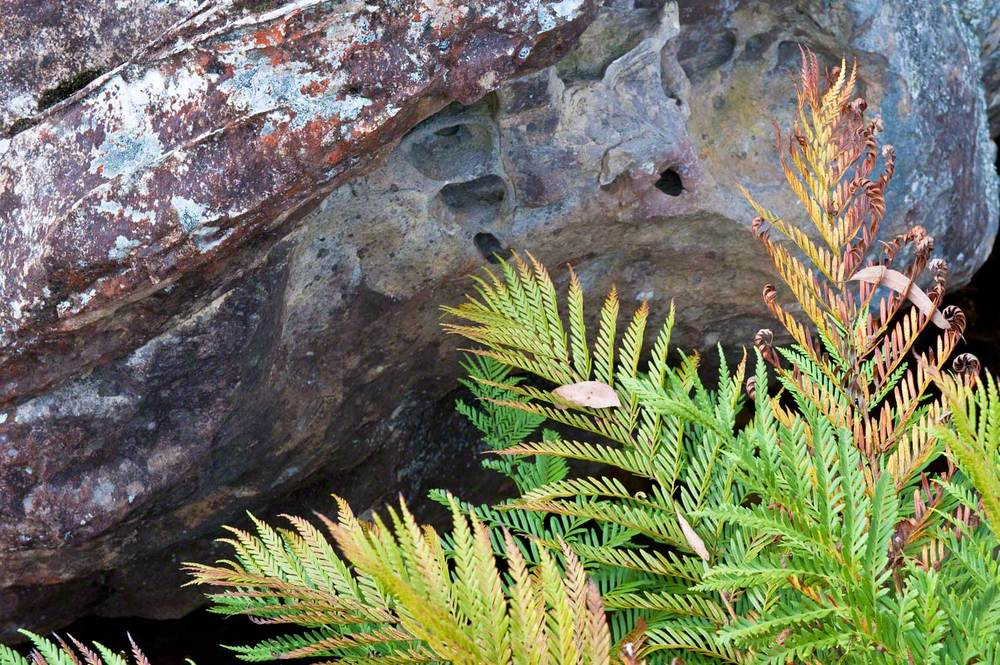 Warren-Hinder-LR-Ferns-and-Rocks-Braeside.jpg