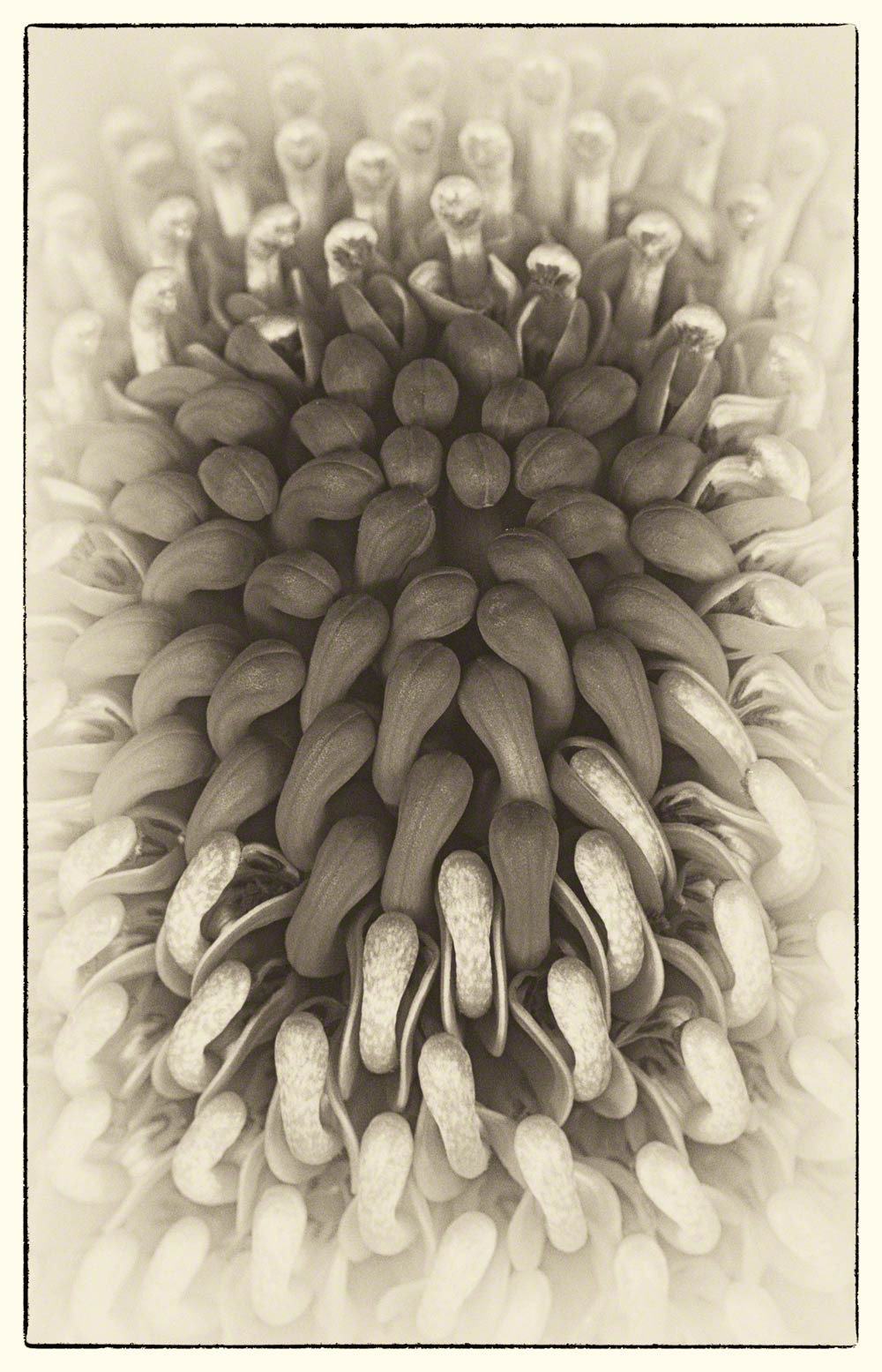 lo-Res-B&W-waratah-Warren-Hinder-copyright-2014.jpg