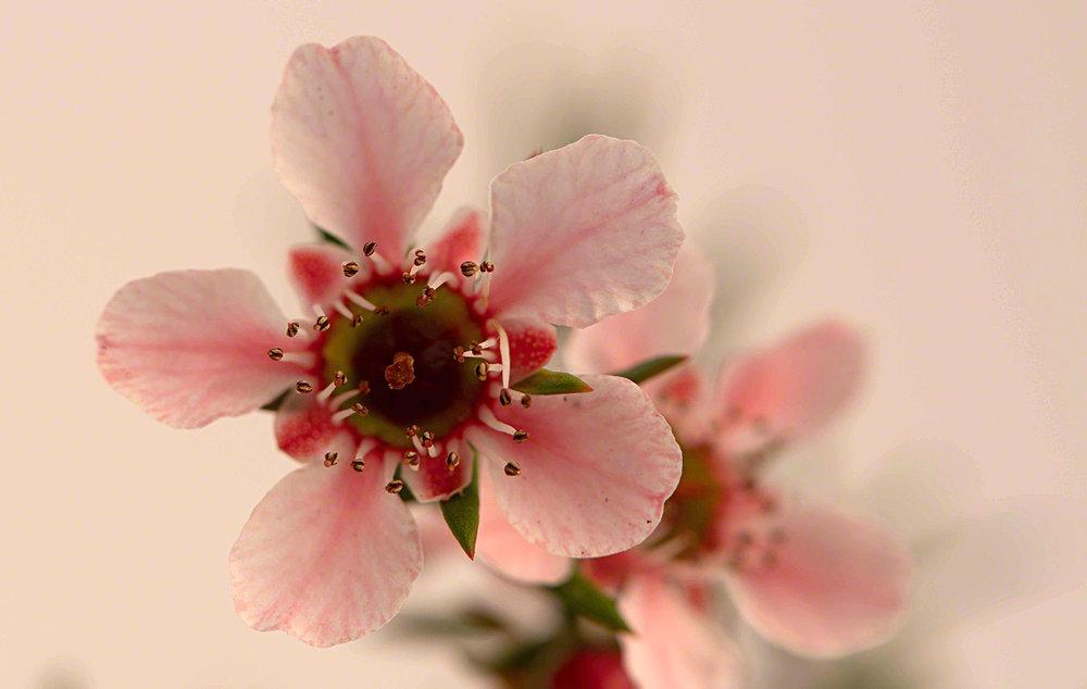 flower8-lo-res.jpg