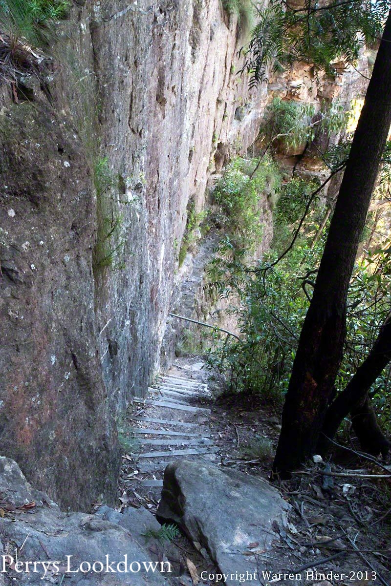 Perrys Lookdown Track to Bluegum