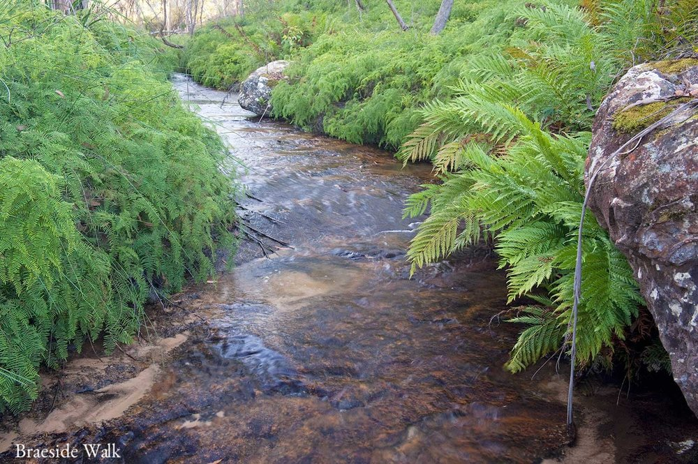 Warren-Hinder-LR-Blackheath-Braeside-Walk-Stream.jpg