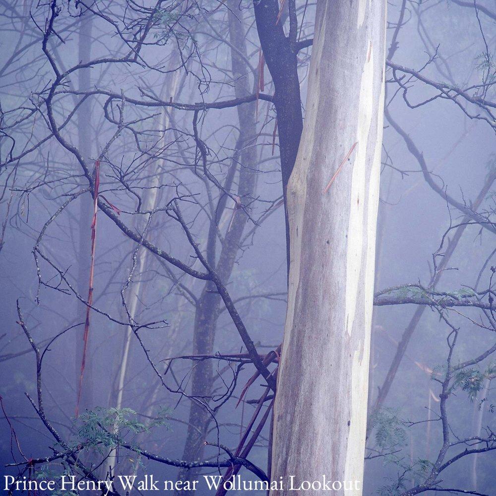 Warren-Hinder-Square-Tree-Mist-Prince-Henry-.jpg
