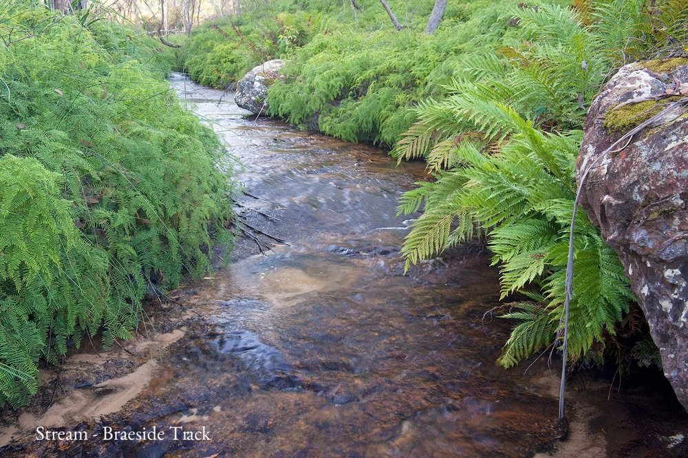 Warren-Hinder-Blackheath-Braeside-Walk-Stream.jpg