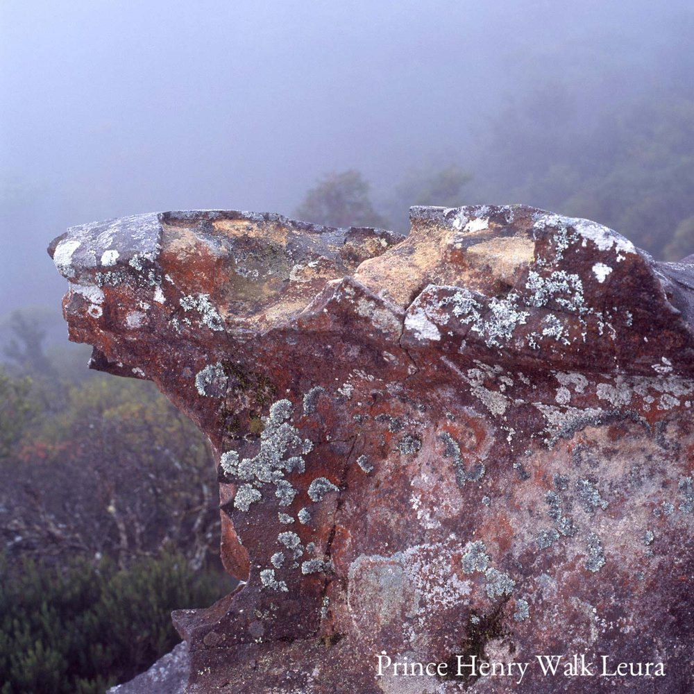 Warren-Hinder-Rock-Detail-Prince-Henry-Walk-Leura.jpg