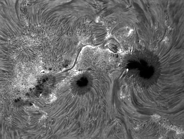 Sunspot10Jan2014BW.jpg