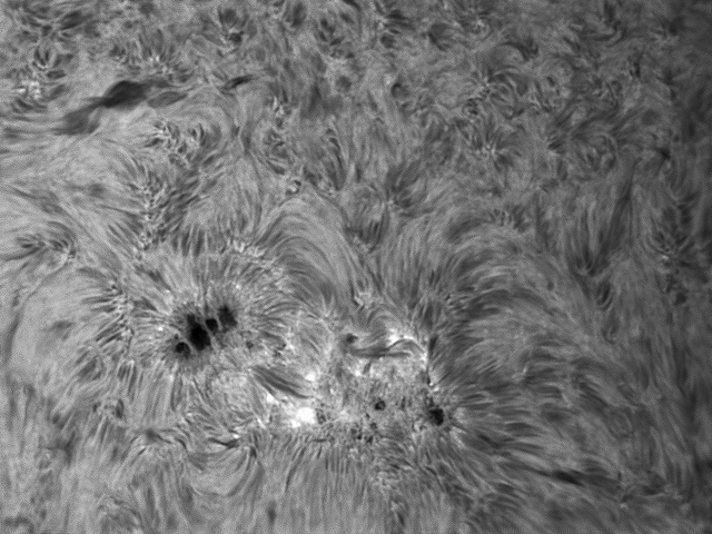 Sunspot10Jan2014-BW.jpg