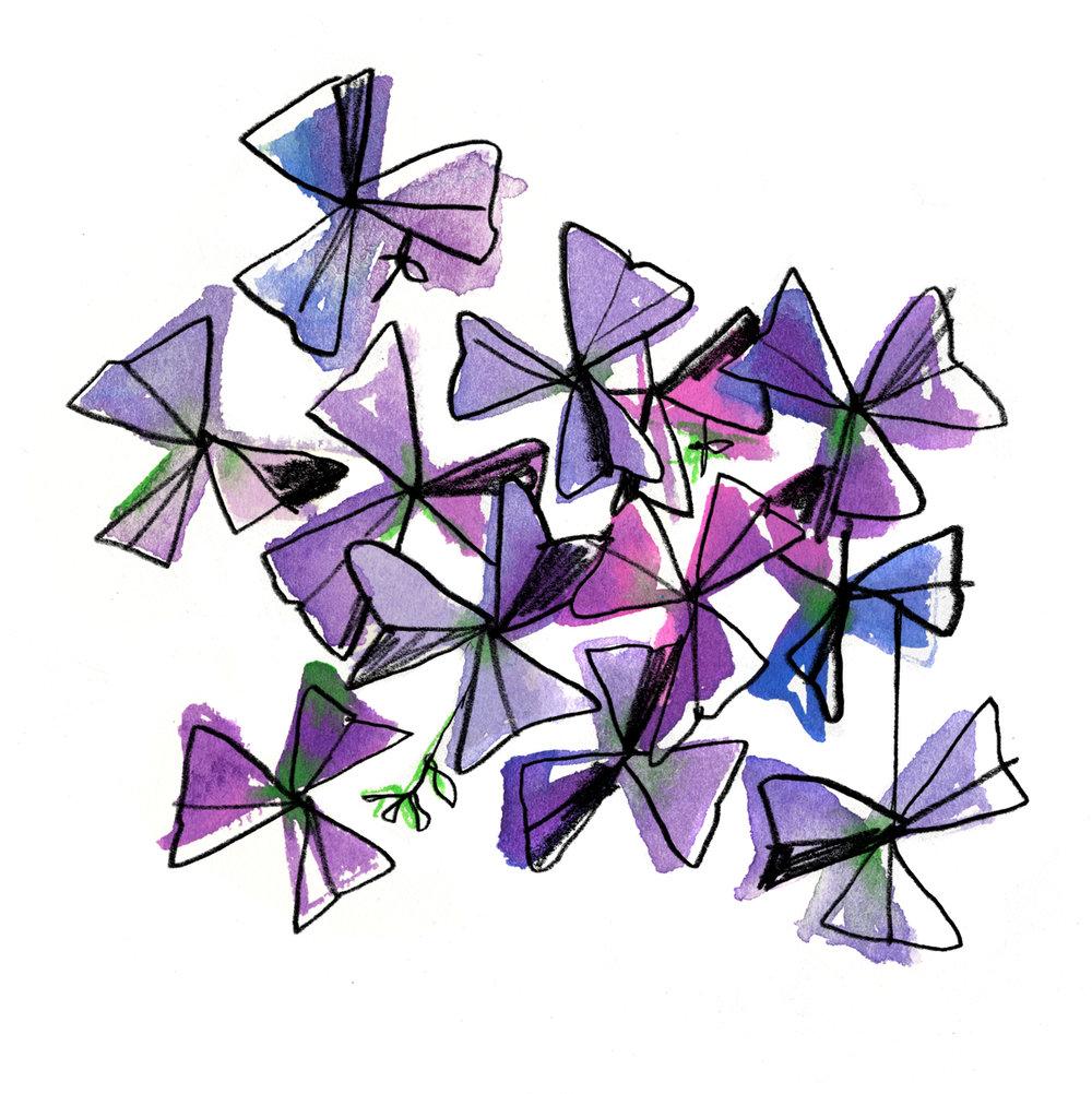 Triangularis