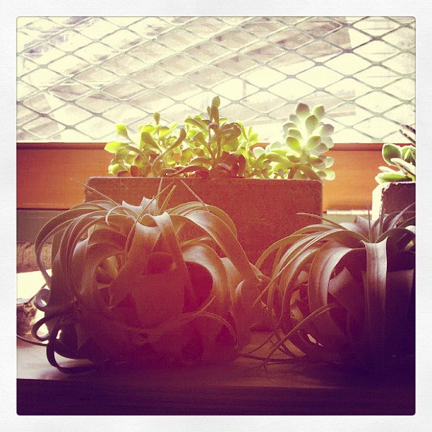Air plants and succulents @ Beam and Anchor. Love.