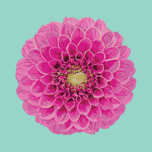 Dahlia  •  Prints and pillows are available in my Society 6 shop.