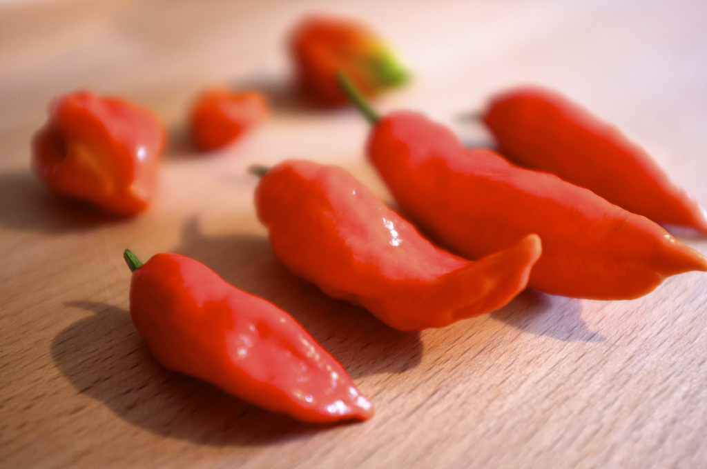 bballentine: I moved a couple of my Ghost Pepper plants indoors last month and they're still producing beautiful peppers. We like to keep things spicy in our household. :)