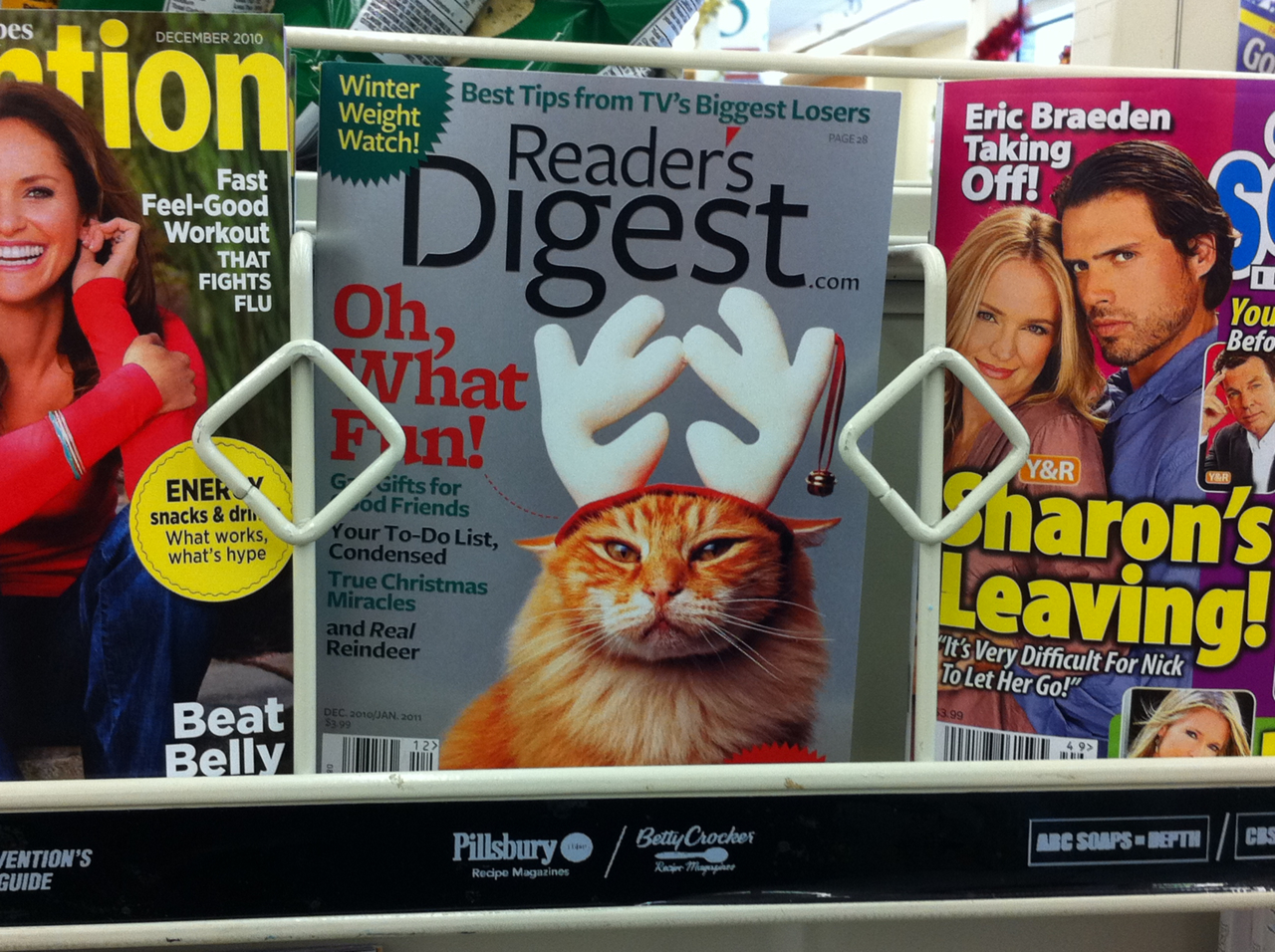 I don't believe this cat feels any holiday cheer. (Snapped this fine pic at the grocery store over the weekend.)