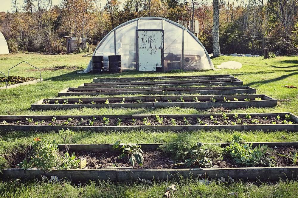 One of the greenhouses and rows of raised beds on the Colvin Farm.