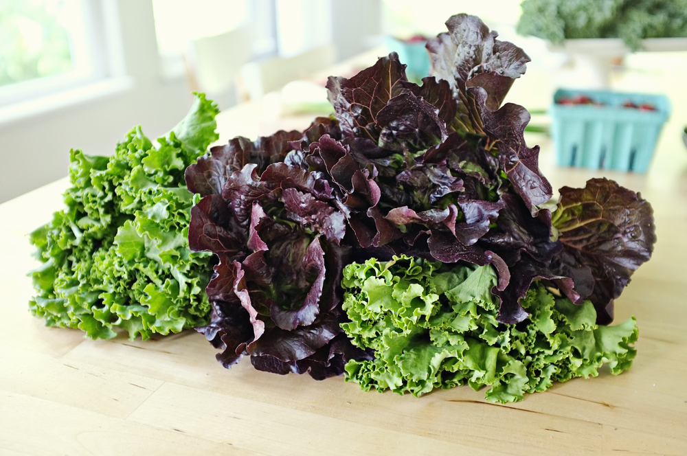 Green lettuce and red lettuce