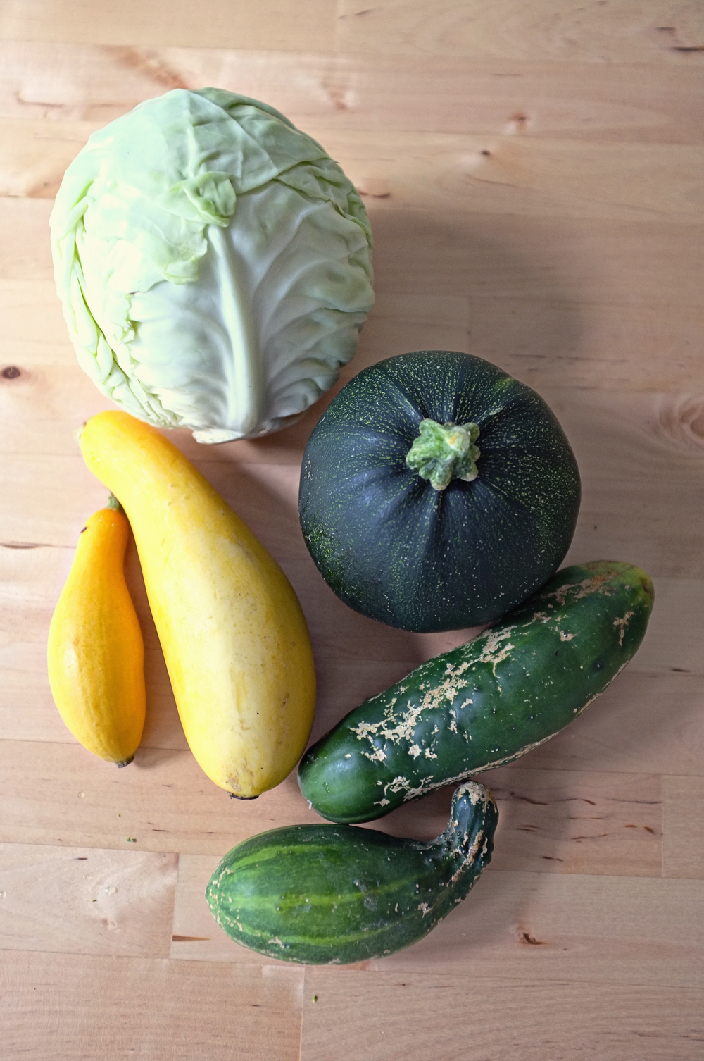 Cabbage, green globe zucchini, yellow squash, and cucumbers