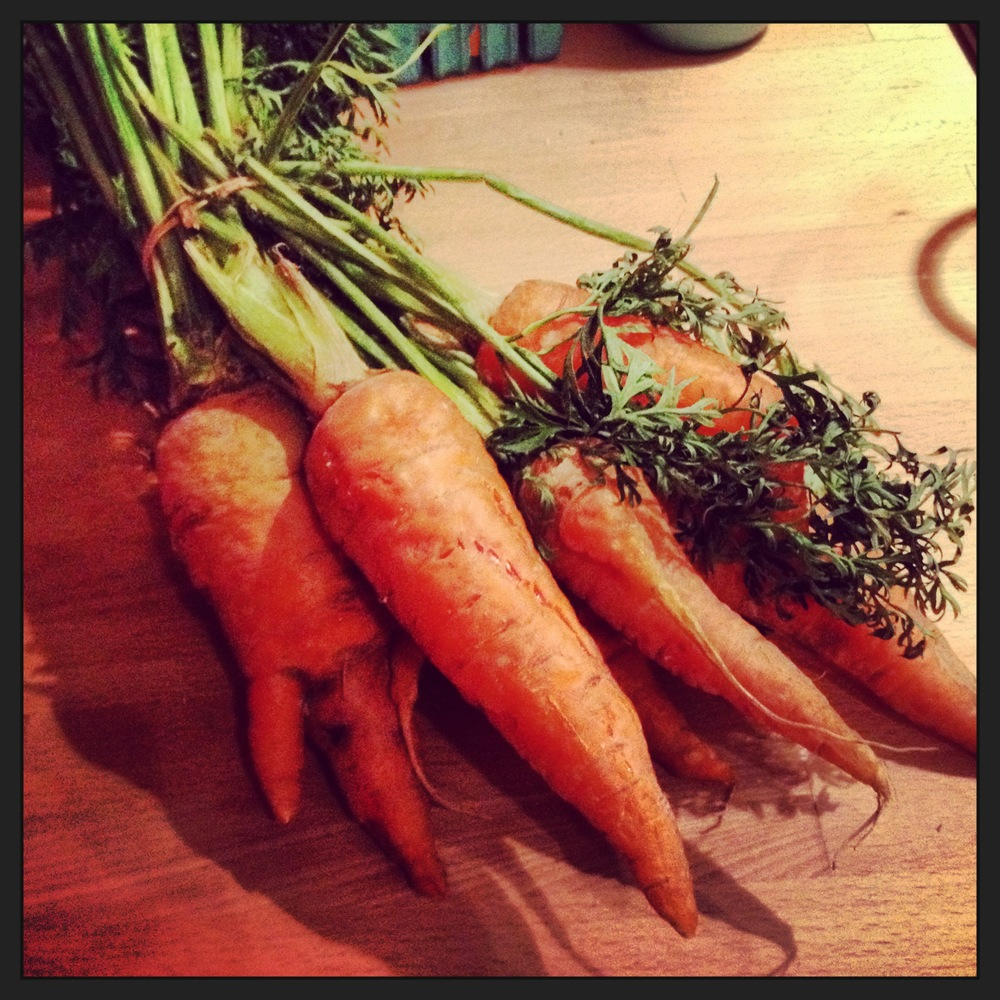 The last of the carrots, which I used to make a hearty beef stew.