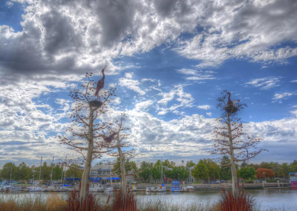 Early HDR of Herons