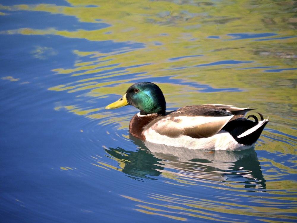 Floating amid strange reflections