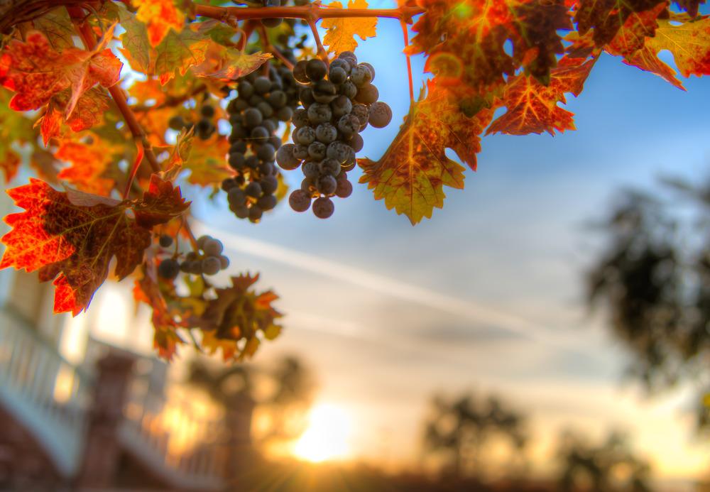Concannon Winery, Livermore CA
