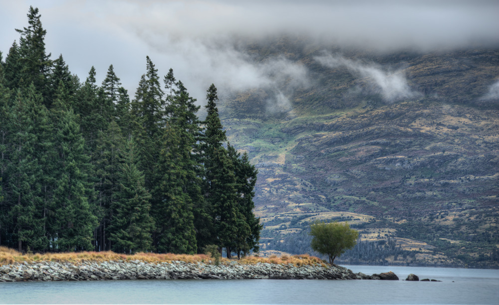 Lone Tree on Lake Wakatipu, New Zealand