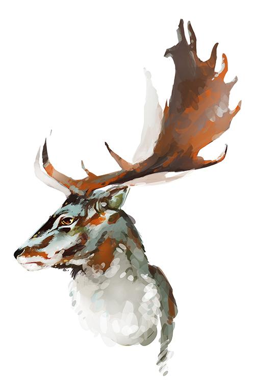 deer - taeksidermi
