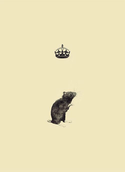 Rat - Greg Eason