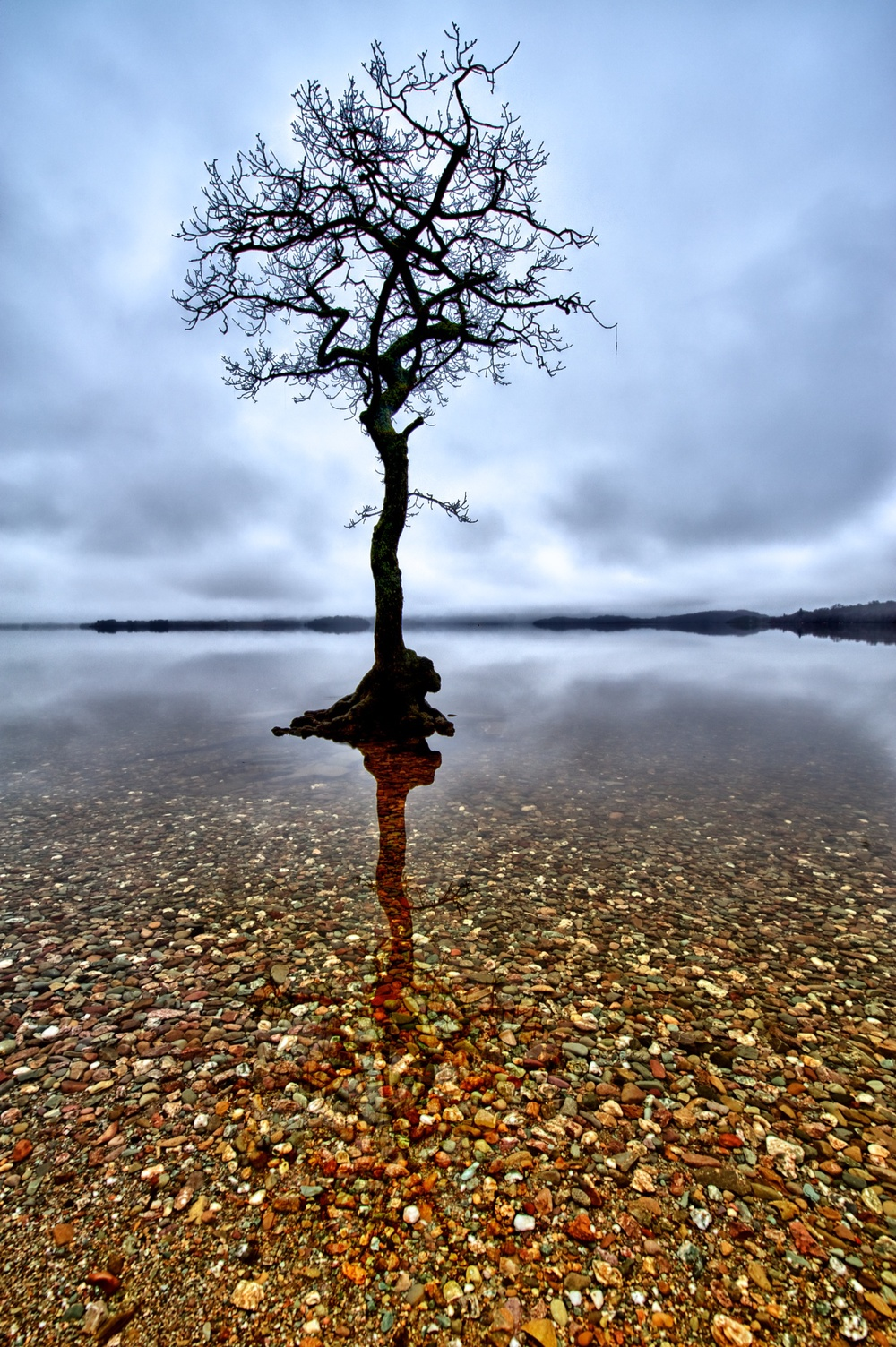 The lone tree at Milarrochy Bay.jpg