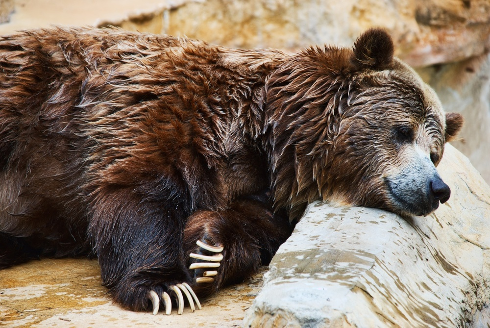 Sleepy bear.jpg