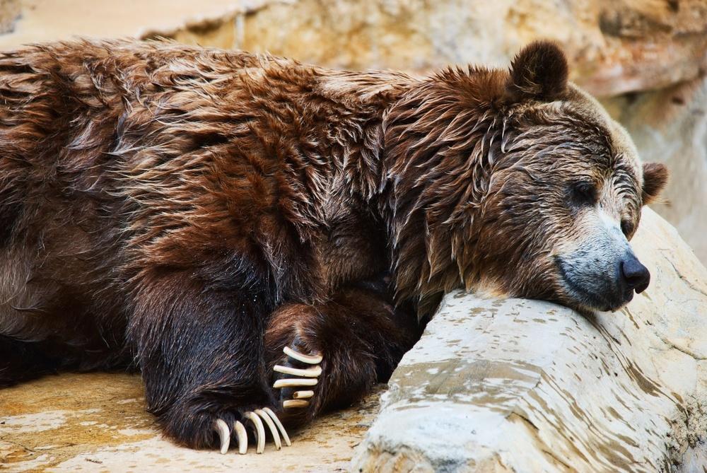 Sleepy bear.jpg